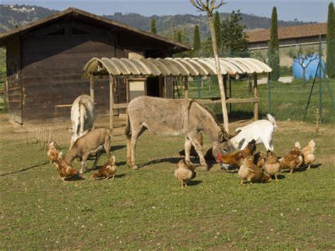 quali sono gli animali da cortile maneggio gi 210 ranch di pistoia ti aspettiamo tra cavalli