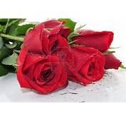 Pics Photos  Rosas Rojas