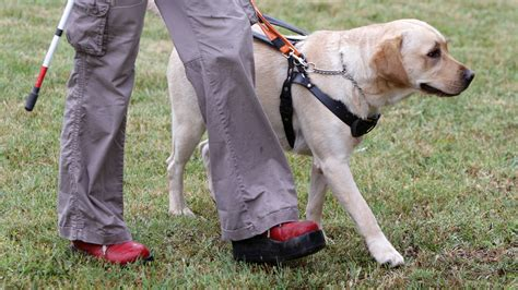 seeing eye dogs tap and pay to pat a and donate to charity gizmodo