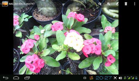 Mangkuk Tahan Panas 200ml Termurah tanaman hias tahan panas tanamanbaru