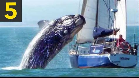 whale boat video top 5 whale vs boat videos youtube