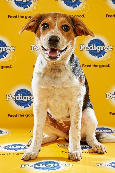 puppy bowl 2016 puppy bowl 2016 scout reel with