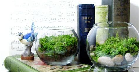 live plant office terrarium mini indoor desk garden live plant office terrarium mini indoor desk garden