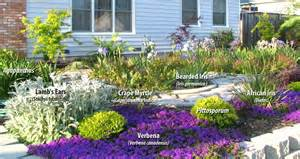Some native plants are drought tolerant as well as low maintenance