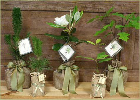 Wedding Favors Trees by Do Me A Favor Plant A Tree The Brass Paperclip Project
