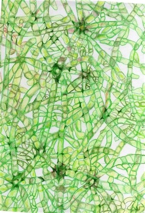 patterns in nature plants 46 best microscope images images on pinterest