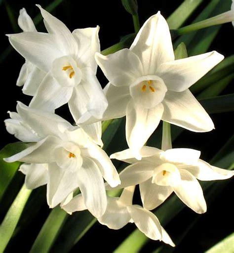 imagenes de flores blancas hermosas bonitas flores blancas imagen 3508 im 225 genes cool