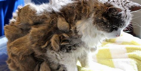 A Cat With Matted Fur by Lonely Living On The Was Hiding The Cutest