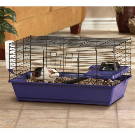how high should my bed be 5 common mistakes guinea pig owners make pethelpful