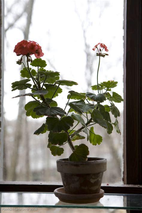 indoor winter garden flowers to brighten the indoor winter garden