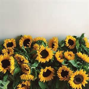 2214 Best Everything Plants And Flowers Images On Pinterest 25 Best Ideas About Sunflowers On Pinterest Smile