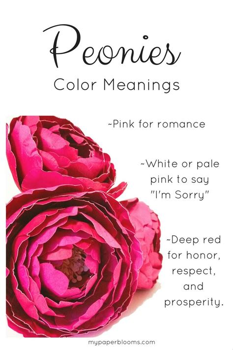 peony color 1000 ideas about peony flower meaning on
