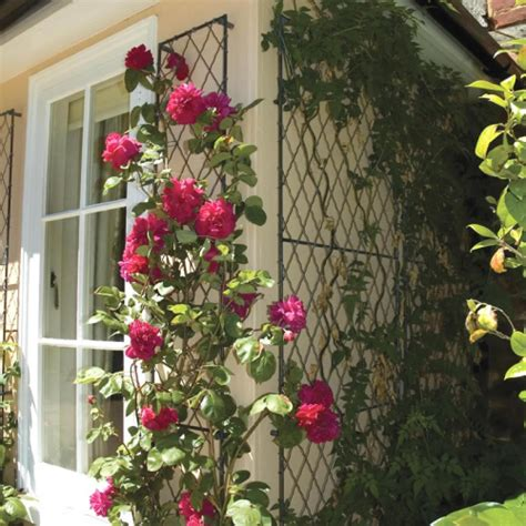 Wall Climbing Plants For Your Garden Wall Trellis Trellis Panels