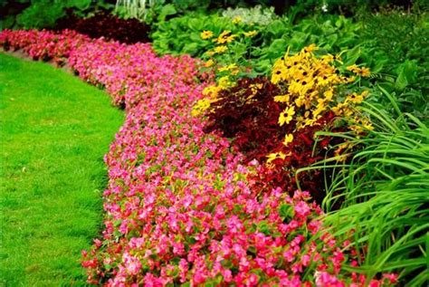 Borders For Flower Beds by How To Plant Borders Flower Beds