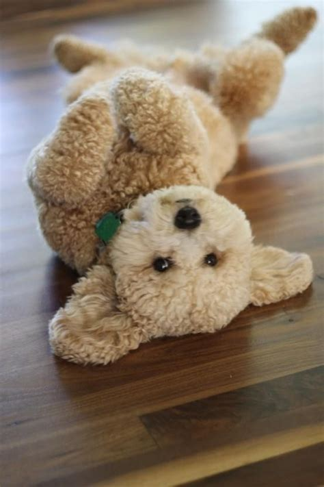 puppy that looks real this doggie does not even look real adorable puppies and dogs pin
