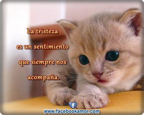 imagenes de gatos tristes con mensajes frases de tristeza para facebook lindo gatito im 225 genes