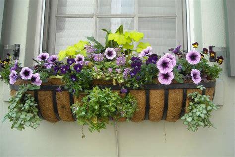 decorar ventana patio c 243 mo decorar una ventana con plantas guia de jardin