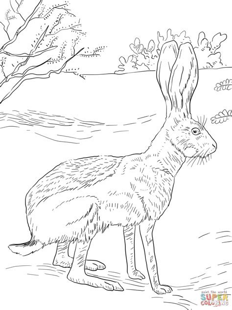 coloring pages jack rabbit antelope jack rabbit coloring page free printable coloring