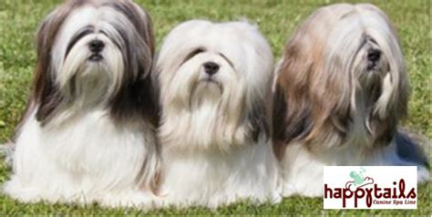 haired dogs haired tips how to save hundreds at the groomers ruff ideas
