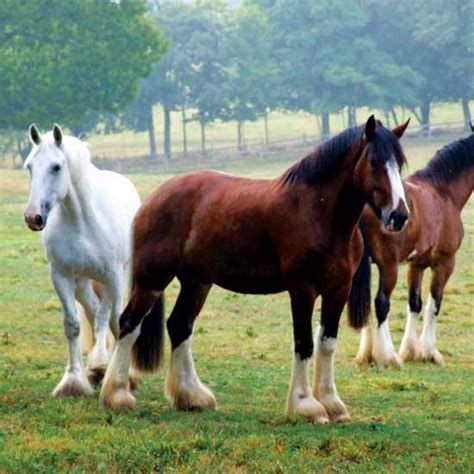 history   great american horse breeds animals
