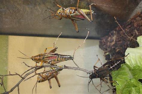 comfort inn manhattan bridge bed bugs fotos de shafter im 225 genes de shafter ca tripadvisor