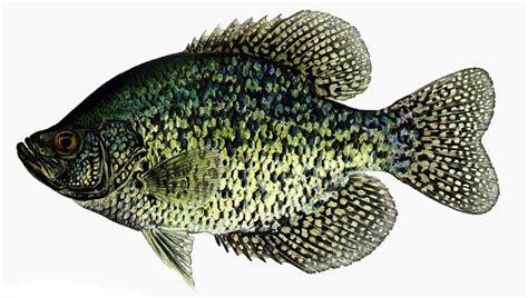 february   prime time  fish  crappie