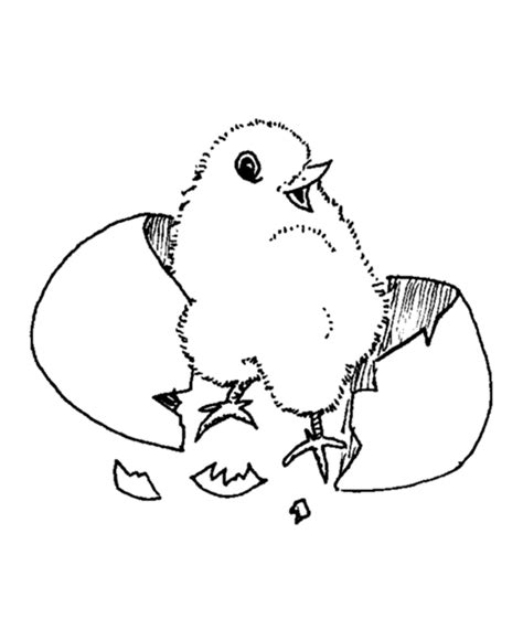 coloring page baby chick easter chick coloring pages baby chick easter coloring