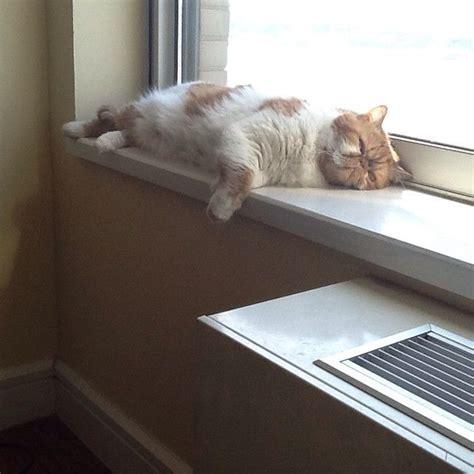 cat window seats window seat chester smooshyface