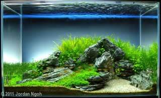 38 best freshwater aquarium images on aquarium