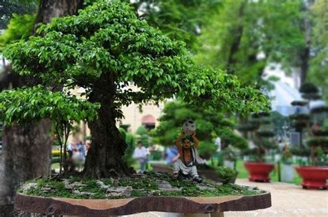 bonsai interno bonsai da interno bonsai bonsai per appartamento