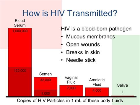 how is hiv 101 fundmentals of hiv aids ppt