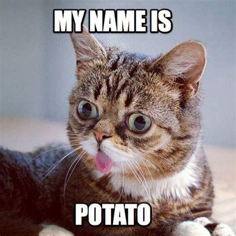 Lil Bub Meme - lil bub memes anime amino