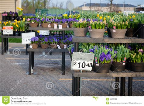 home improvement shopping flowers editorial stock photo