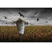 Who's Your Scarecrow