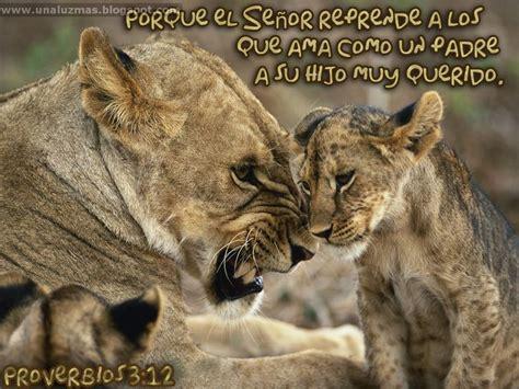 imagenes chistosas nunca antes vistas las mejores fotos de leones nunca antes vistas im 225 genes