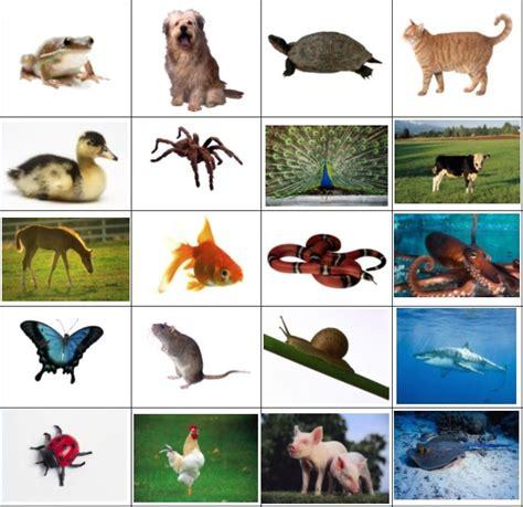 imagenes de animales viviparos actividad para aprender sobre los animales ov 237 paros para
