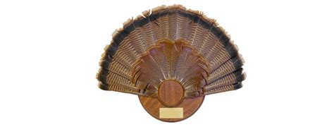 how to mount a turkey fan create the perfect fan mount