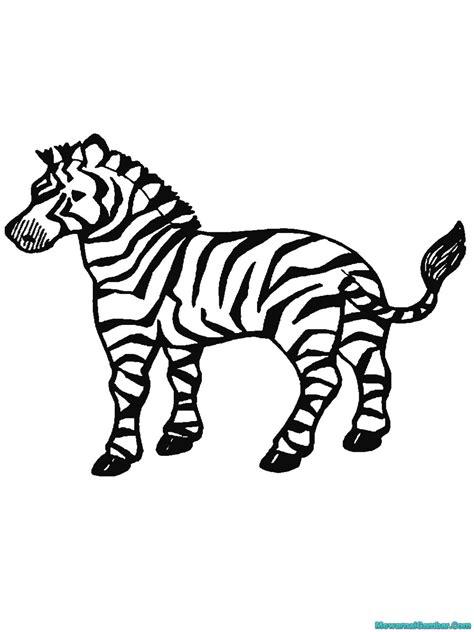 buku mewarnai  gambar zebra mewarnai gambar