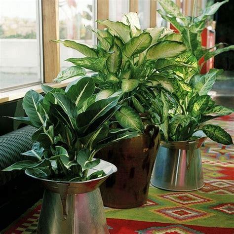 piantine appartamento piantine appartamenti piante appartamento piante da