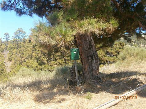 Baum Tieferlegen by La Palma Aktuell Frische Nachrichten Aus La Palma