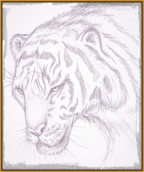 imagenes para dibujar a la lapiz imagenes de tigres para dibujar a lapiz faciles archivos