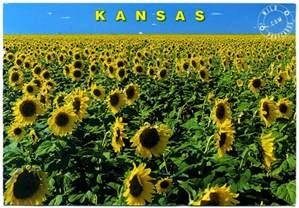 kansas images kansas sunflowers hd wallpaper and