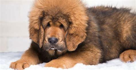 Cães: as raças mais curiosas e raras do mundo | Blog ...