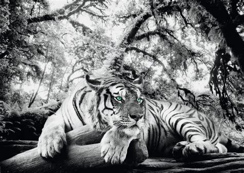 bild kinderzimmer tiger xenos poster tiger is you te koop bestel