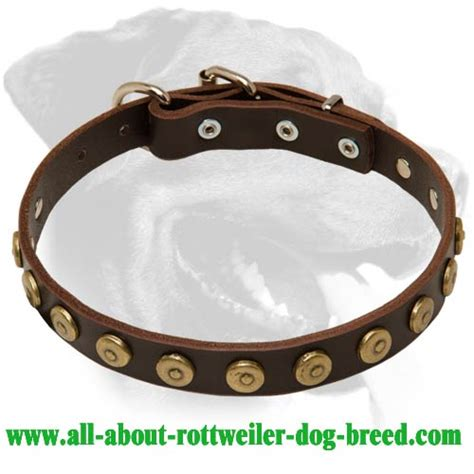 rottweiler leather collars get leather rottweiler walking collar brass dotted circles