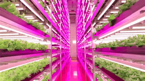 led  lighting    indoor farming ge reports