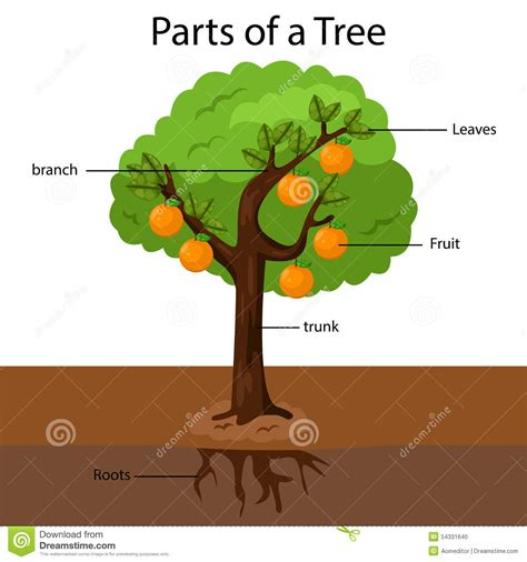 picture of a tree illustrator parts of a tree stock vector image 54331640