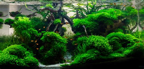 aquascape ada aquascape no 3 ada 90p moss canyon final photo on 1st page the planted tank forum