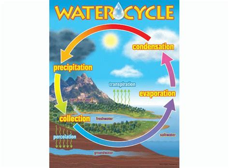 simple water diagram water cycle chart quotes