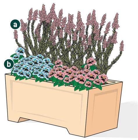 calluna vulgaris in vaso due fioriere colorate in terrazzo cose di casa